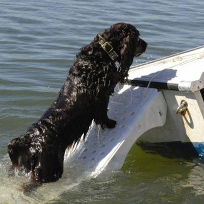 Afbeelding 5 van Azalp Skamper-Ramp trap speciaal voor honden