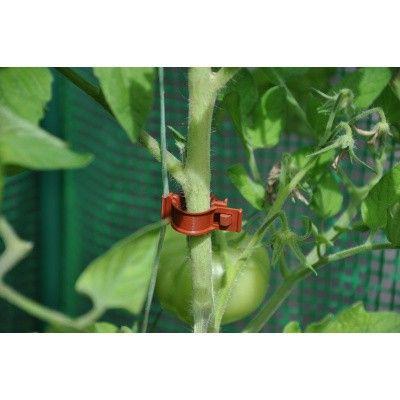 Hoofdafbeelding van Royal Well Tomatenclips