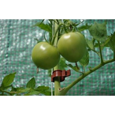 Afbeelding 3 van Royal Well Tomatenclips