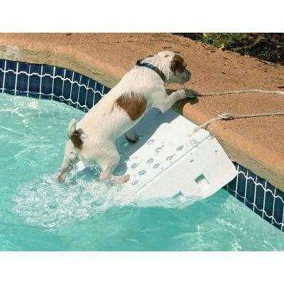 Afbeelding 2 van Azalp Skamper-Ramp trap speciaal voor honden