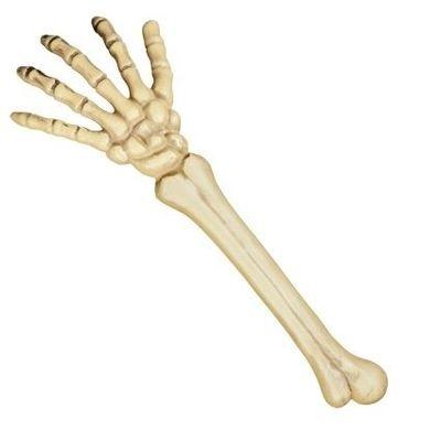 Skelet arm (46 cm)