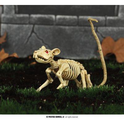 Foto van Skelet Rat