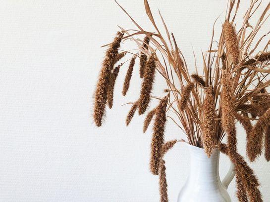 Dry FLWRSBei DRY FLWRS finden Sie eine einmalige Auswahl handgefertigter Trockensträuße. Im Gegensatz zu dem, was man erwarten könnte, bestehen die Trockensträuße nicht nur aus getrockneten Blumen, sondern enthalten auch getrocknete Gräsern, Blättern und andere getrocknete Pflanzenarten. Ein Trockstrauss verleiht Ihrem Zushause ein spezielles Ambiente. Im Büro präsentiert sich ein Straus aus trocken Blumen am Empfang immer gut