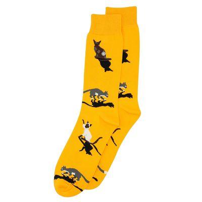 Alfredo Gonzales sokken Cats