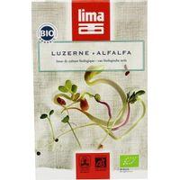 Lima Alfalfa