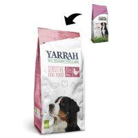Yarrah Hond sensitive