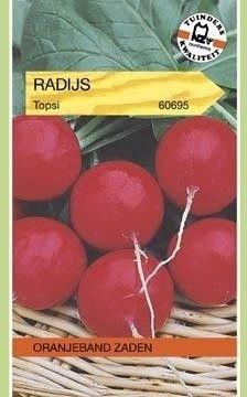 Radijs Topsi Oranjeband