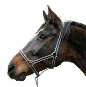 Paardenhalster grijs/zwart
