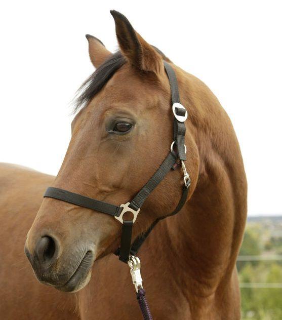 Paarden / pony halster zwart