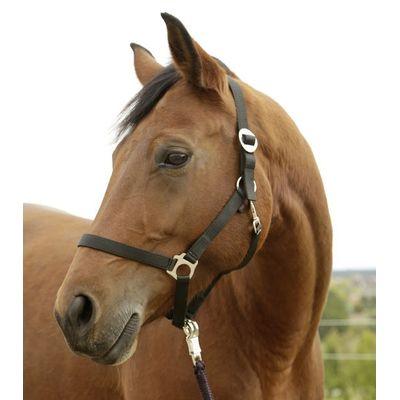 Foto van Paarden / pony halster zwart
