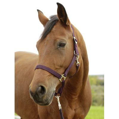 Paarden / pony halster aubergine