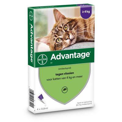 Foto van Bayer Advantage 80 voor katten vanaf 4kg