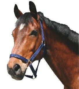 Foto van Paarden / pony halster nylon Classic blauw