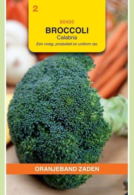 Broccoli Calabria. Oranjeband
