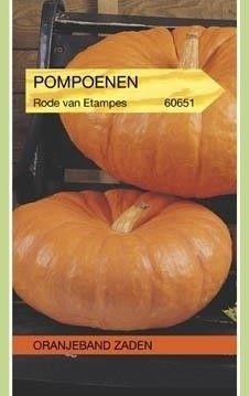 Foto van Pompoenen Rode Van Etampes. Oranjeband