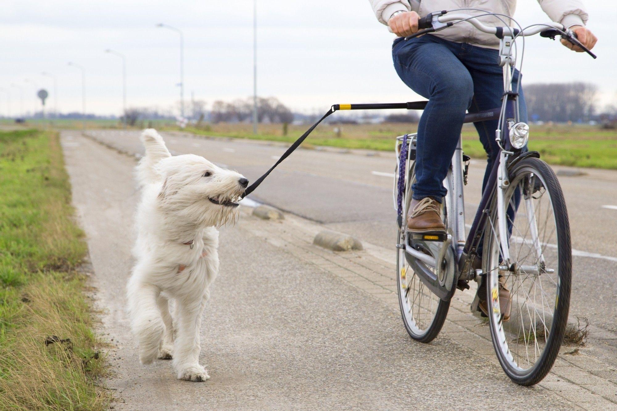 Sportino honden fietsbeugel - fiets afstandhouder