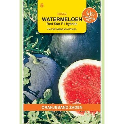 Foto van Watermeloen Red Moon/Red Star F1 Hybride Oranjeband