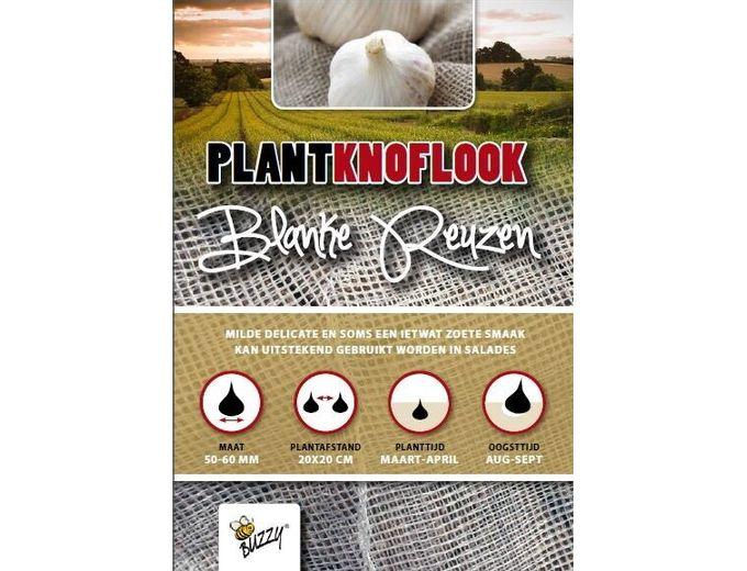 Afbeelding van Plantknoflook Blanke Reuzen 5st (16)