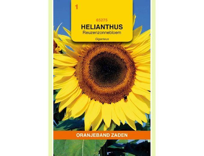 Afbeelding van Helianthus, Zonnebloem Giganteus