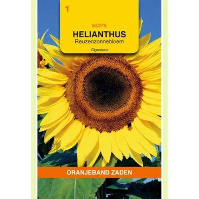 Foto van Helianthus, Zonnebloem Giganteus