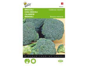 Foto van Broccoli Calabrese natalino, groen