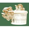 Afbeelding van Shroomin Grow Kit